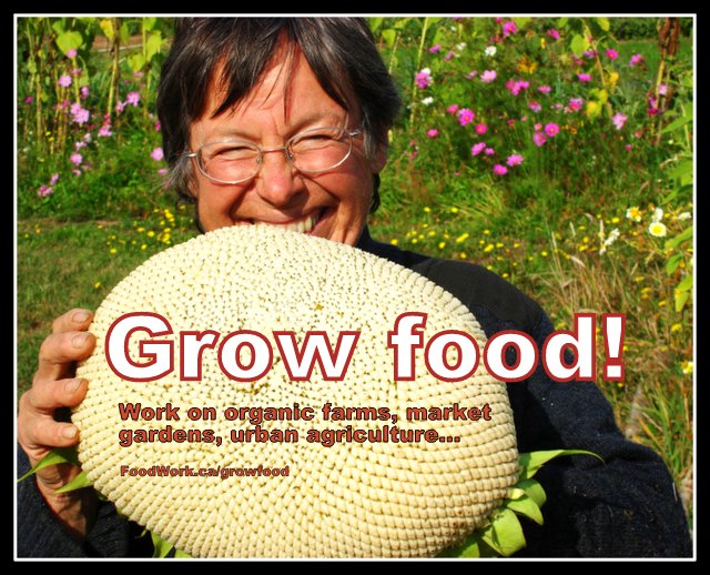 Local food, organic farming, urban agriculture