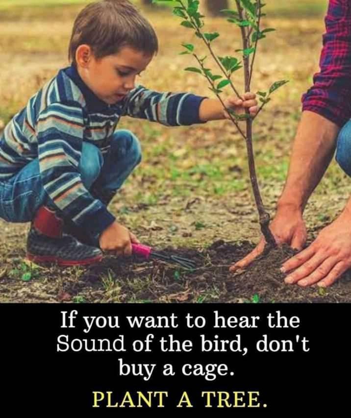 Don't cage it, plantit!